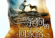 《一条狗的回家路》