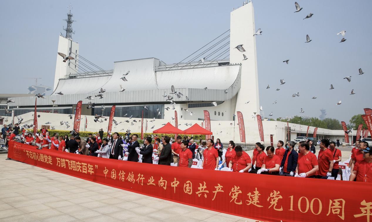 中国信鸽协会将在七条线路进行空中接力赛